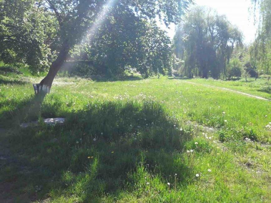 Луцьк: місто заросло травою (ФОТО), фото-9