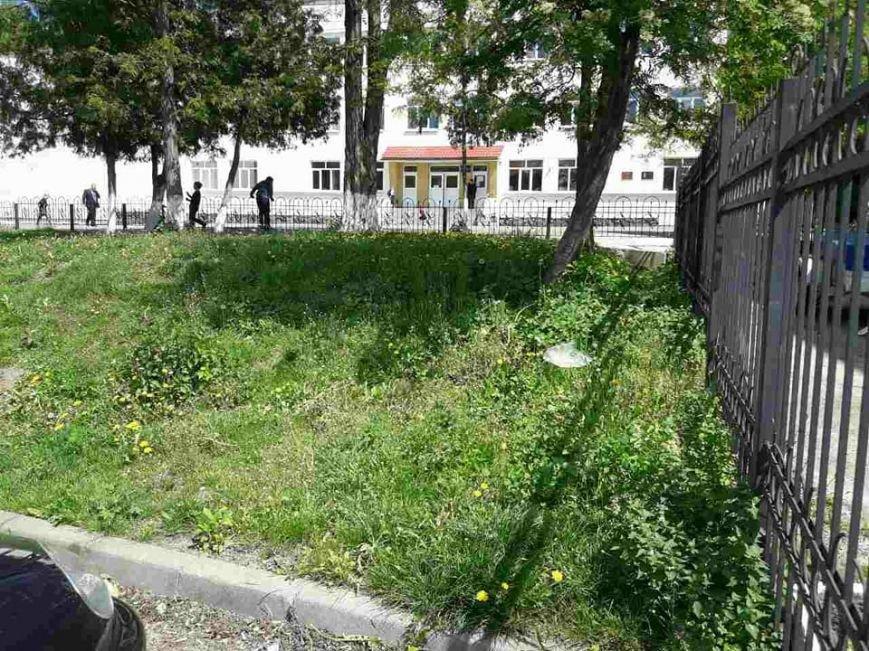 Луцьк: місто заросло травою (ФОТО), фото-11