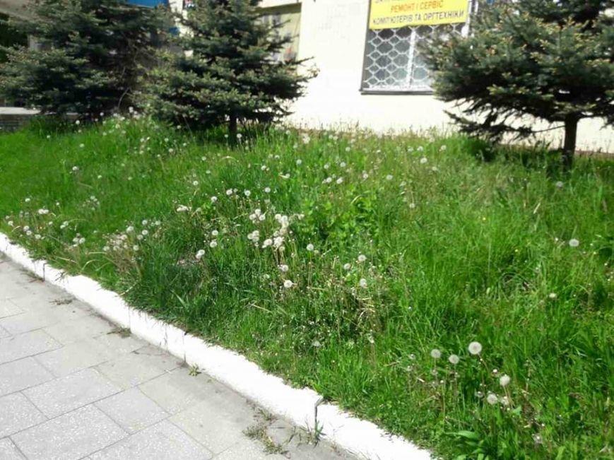 Луцьк: місто заросло травою (ФОТО), фото-1