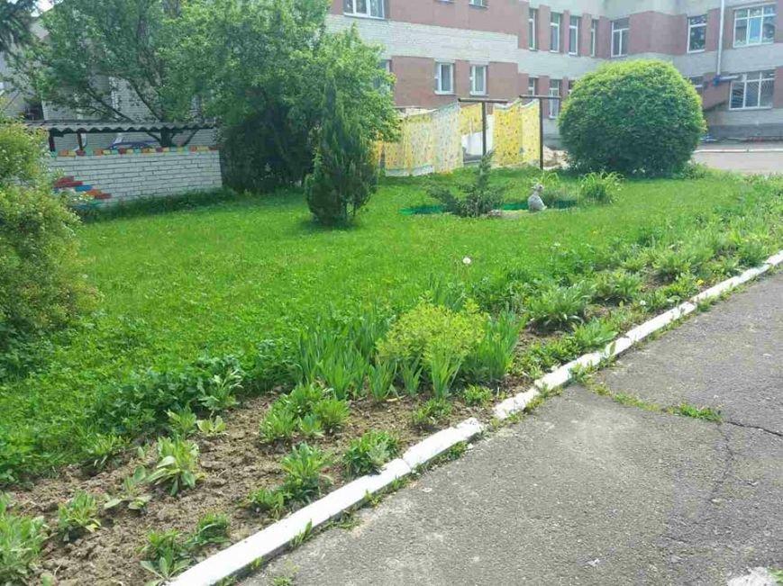 Луцьк: місто заросло травою (ФОТО), фото-10