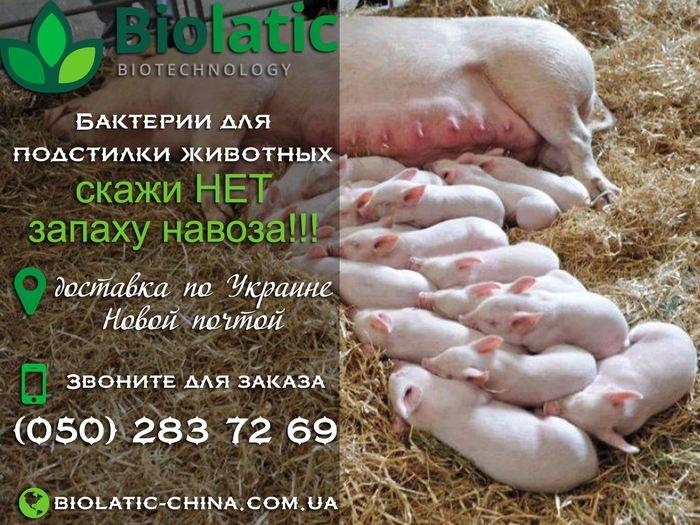 kitaiskie_bakterii_dlia_pererabotki_svinogo_navoza_kupit2