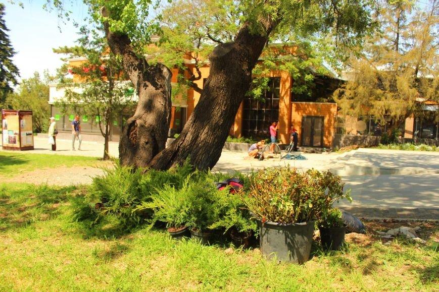 В Екатерининском саду Симферополя появятся клумбы с розами и кусты можжевельника (ФОТО), фото-2
