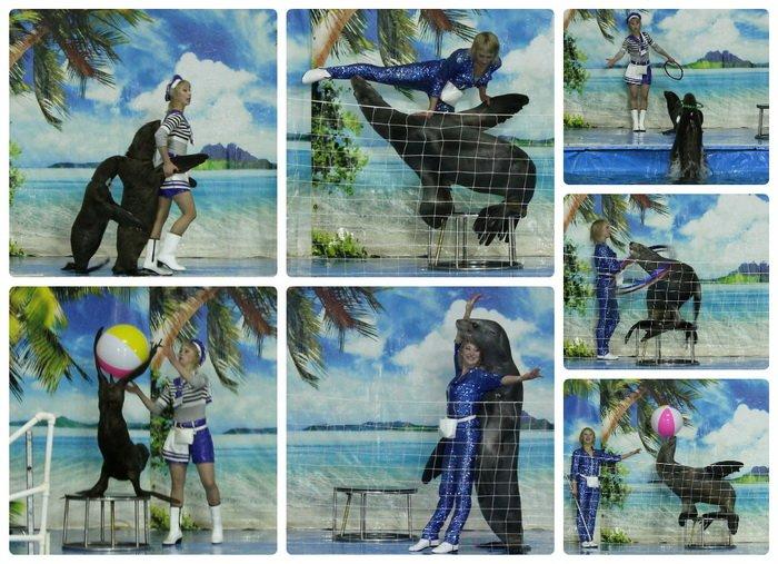 collage_морские котики