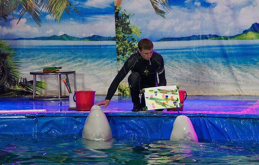 дельфины рисуют