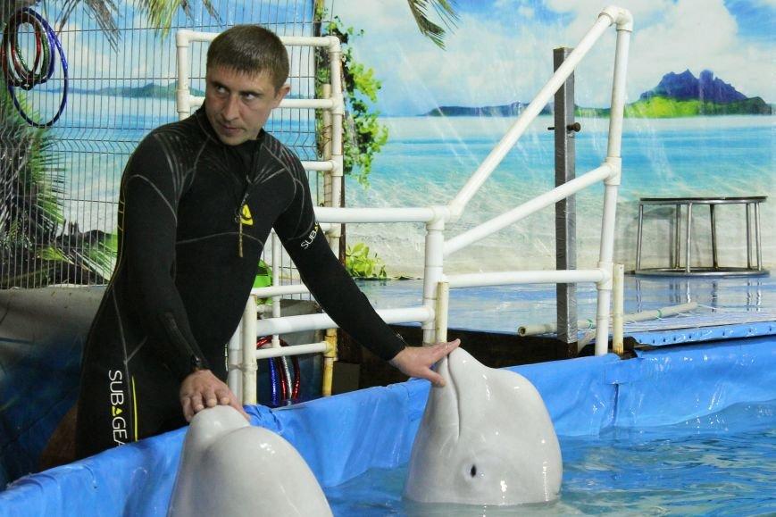 дельфины с тренером