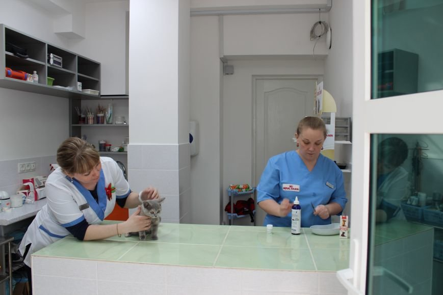 """Весенние скидки на стерилизацию собак и кошек в Зооветеринарном центре """"Друг"""", фото-10"""