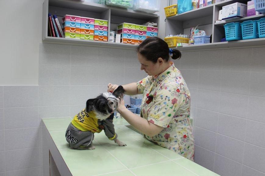 """Весенние скидки на стерилизацию собак и кошек в Зооветеринарном центре """"Друг"""", фото-13"""