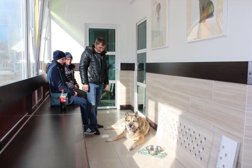 """Весенние скидки на стерилизацию собак и кошек в Зооветеринарном центре """"Друг"""", фото-11"""