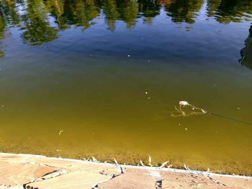 """Здесь рыба есть: В Донецке на прудах """"Виктории"""" поставили сети и раколовки (Фото), фото-1"""