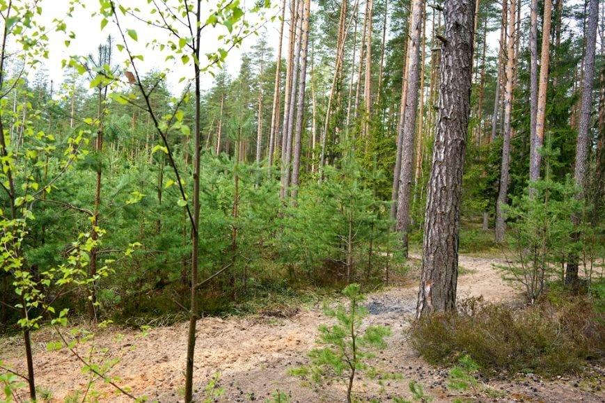 Идем на шашлыки правильно. Как устроить пикник в лесу и не получить штраф?, фото-1