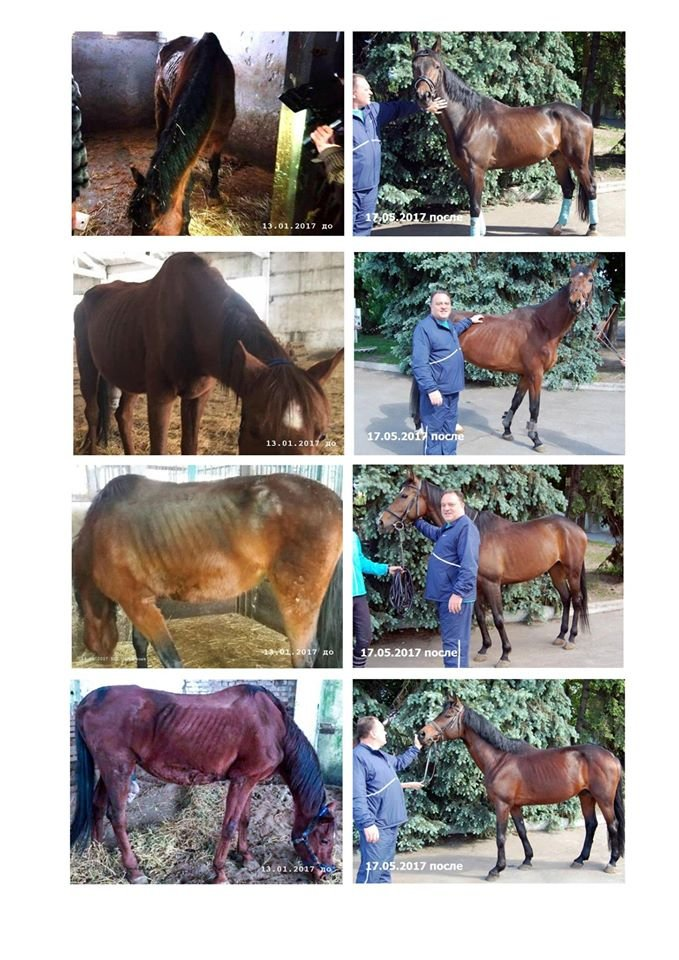 Коней, що ледь не загинули від голоду на Дніпропетровщині, переправили до воїнів АТО, фото-1