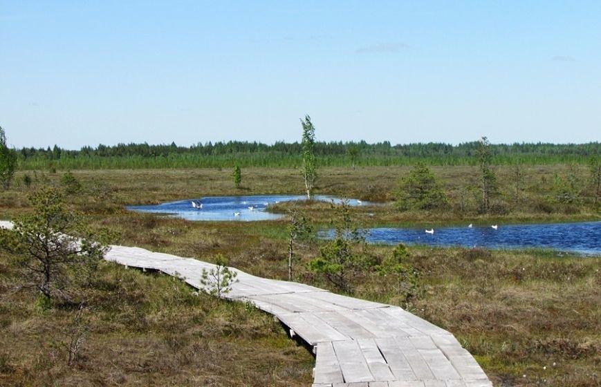Место, благодаря которому в Полоцке и Новополоцке есть чем дышать: маршрут по уникальному болоту Ельня, фото-5