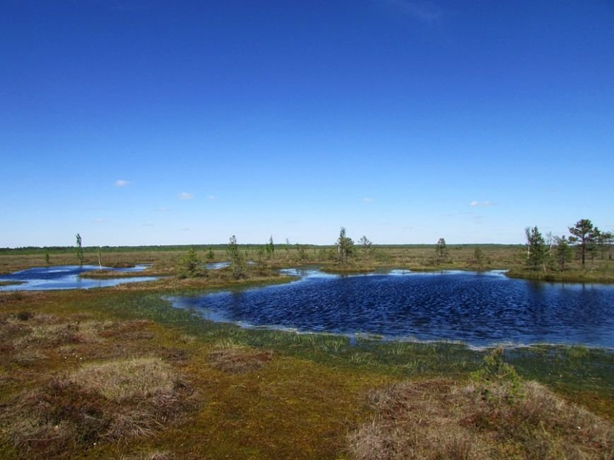 Место, благодаря которому в Полоцке и Новополоцке есть чем дышать: маршрут по уникальному болоту Ельня, фото-8