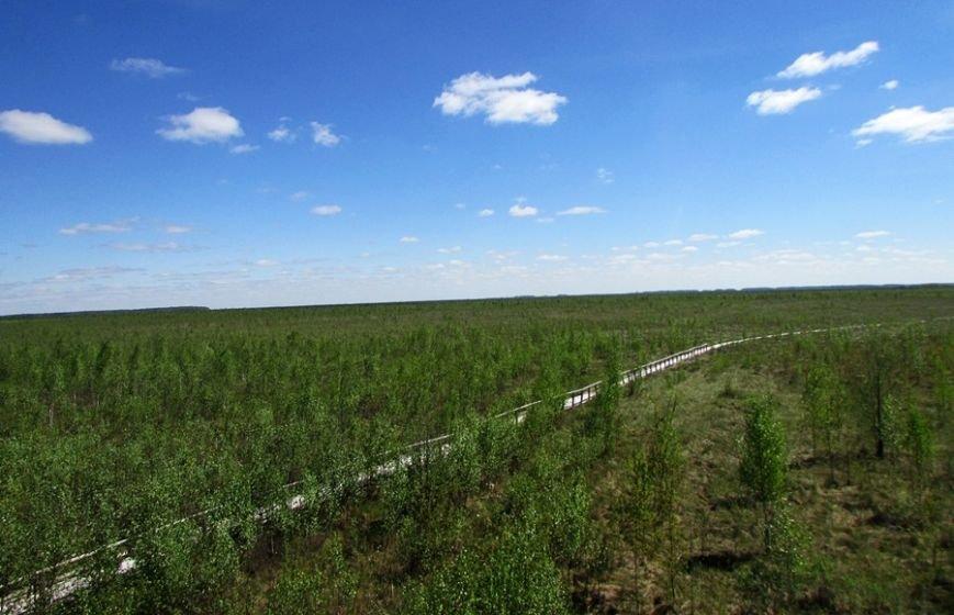 Место, благодаря которому в Полоцке и Новополоцке есть чем дышать: маршрут по уникальному болоту Ельня, фото-4