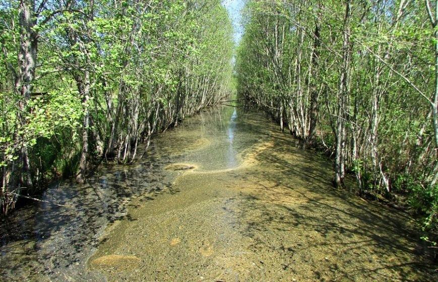 Место, благодаря которому в Полоцке и Новополоцке есть чем дышать: маршрут по уникальному болоту Ельня, фото-3
