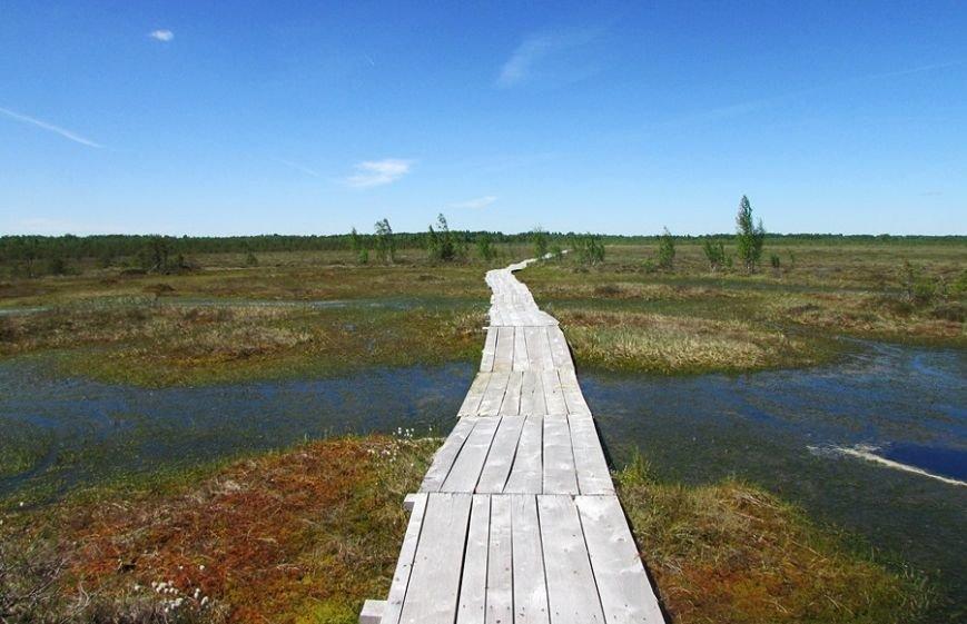 Место, благодаря которому в Полоцке и Новополоцке есть чем дышать: маршрут по уникальному болоту Ельня, фото-7