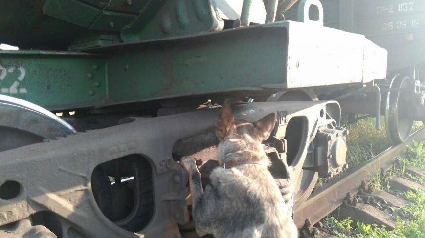 Як на Закарпатті собака-прикордонник знайшов партію цигарок у вантажному поїзді: фото, фото-1