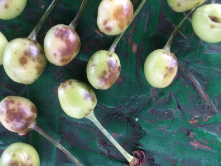 Урожай крымских фруктов пострадал от сильного града (ФОТО), фото-2
