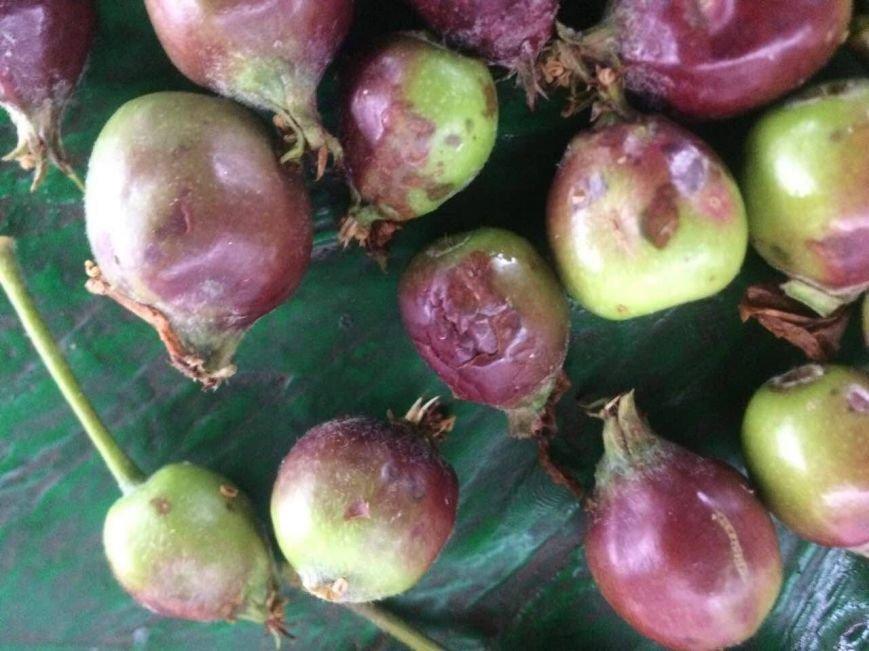 Урожай крымских фруктов пострадал от сильного града (ФОТО), фото-6