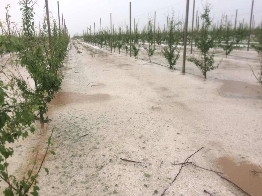 Урожай крымских фруктов пострадал от сильного града (ФОТО), фото-5