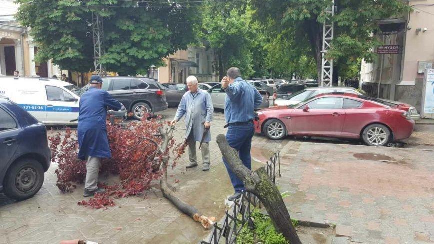 В центре Симферополя на месте одной из красавиц-слив Писсарди остался пень (ФОТОФАКТ), фото-3