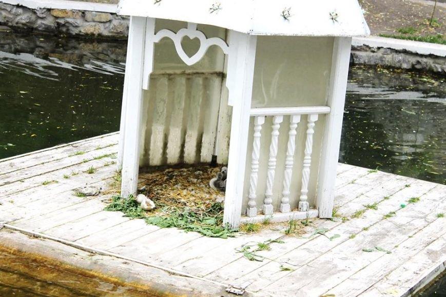 Родина лебедів на озері поповнилась, фото-1