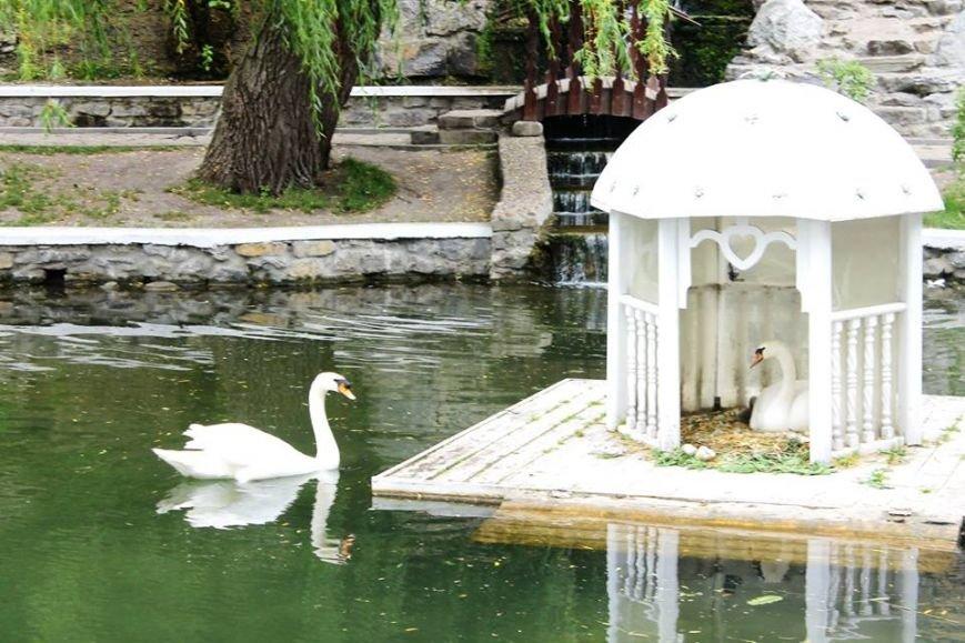 Родина лебедів на озері поповнилась, фото-4