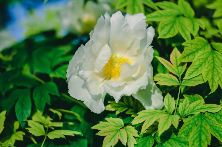 Весенние цветы – красота, поднимающая настроение (ФОТО), фото-9