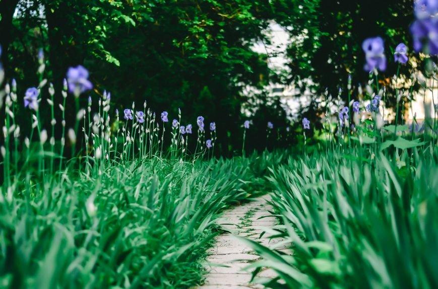 Весенние цветы – красота, поднимающая настроение (ФОТО), фото-11