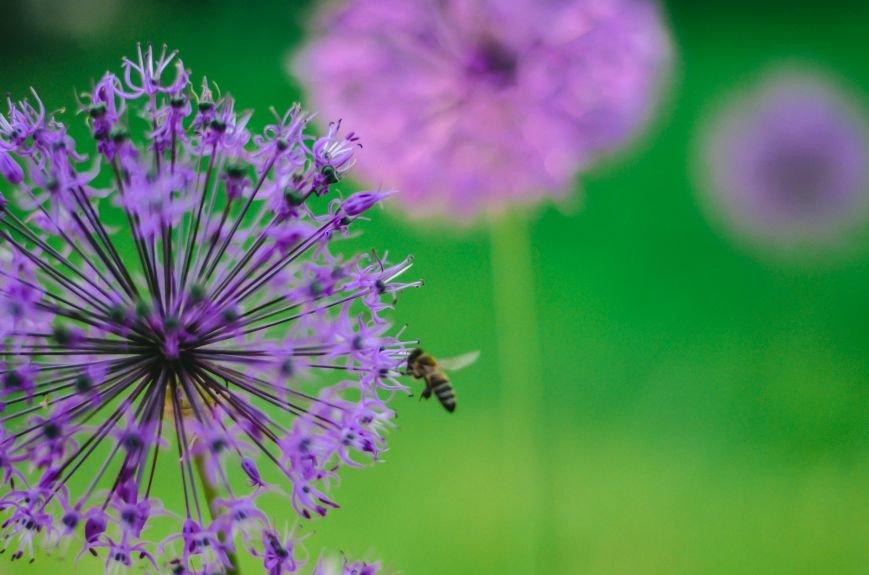 Весенние цветы – красота, поднимающая настроение (ФОТО), фото-3
