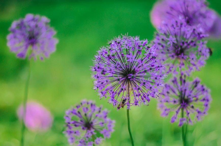 Весенние цветы – красота, поднимающая настроение (ФОТО), фото-2