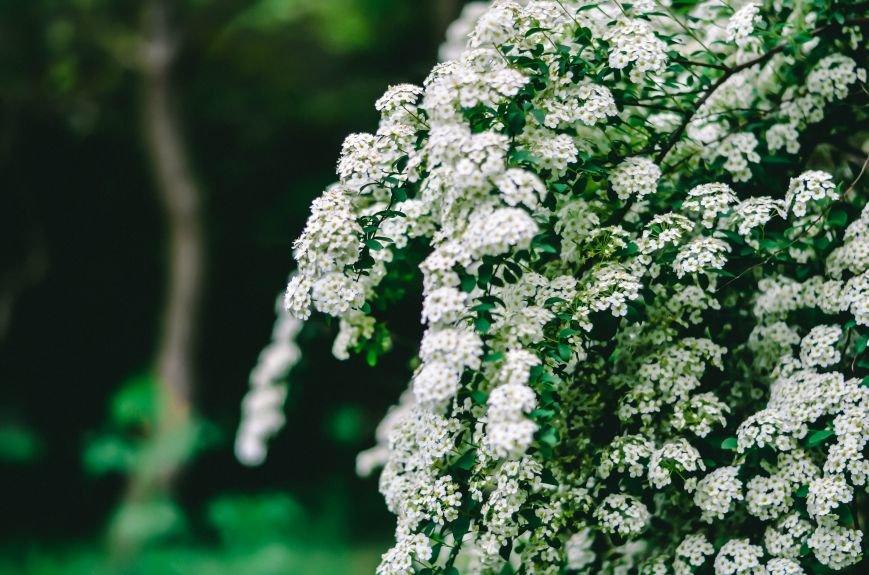 Весенние цветы – красота, поднимающая настроение (ФОТО), фото-13