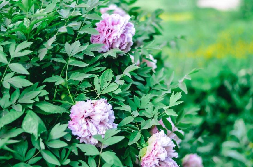 Весенние цветы – красота, поднимающая настроение (ФОТО), фото-5