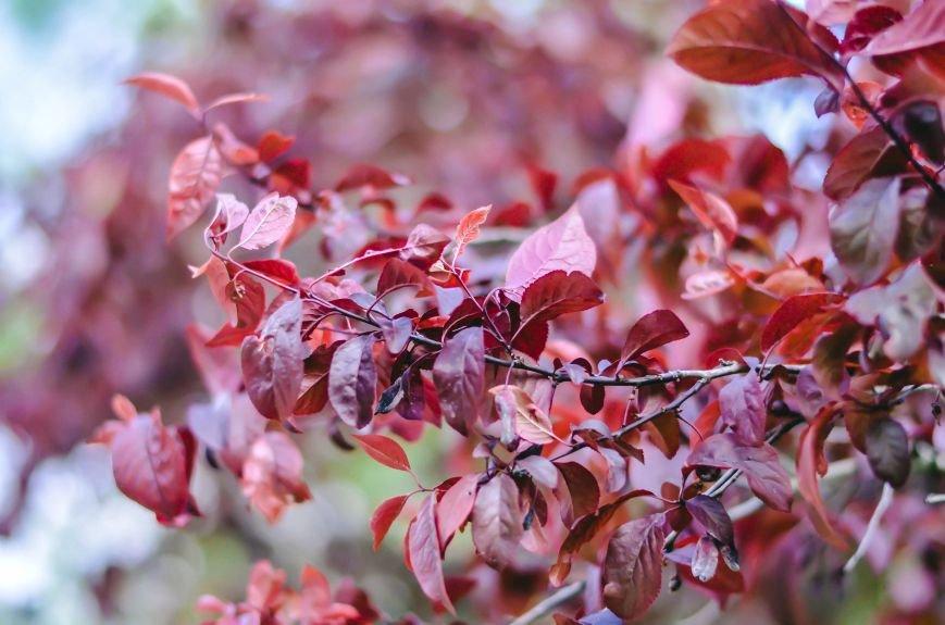 Весенние цветы – красота, поднимающая настроение (ФОТО), фото-4