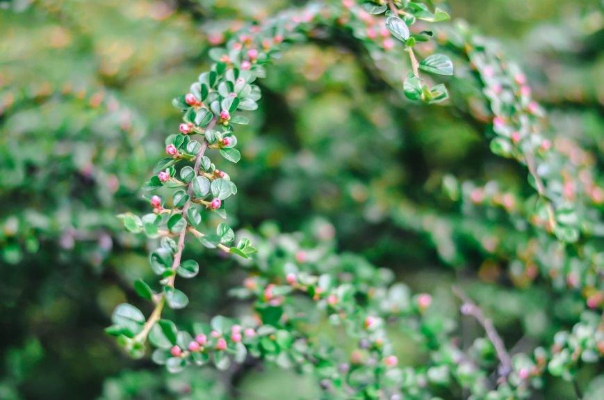 Весенние цветы – красота, поднимающая настроение (ФОТО), фото-1