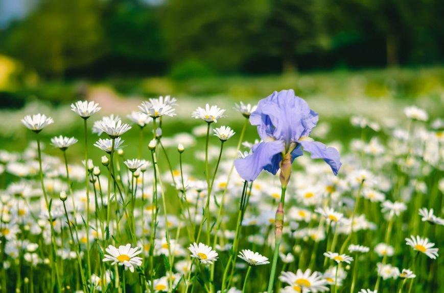 Весенние цветы – красота, поднимающая настроение (ФОТО), фото-7