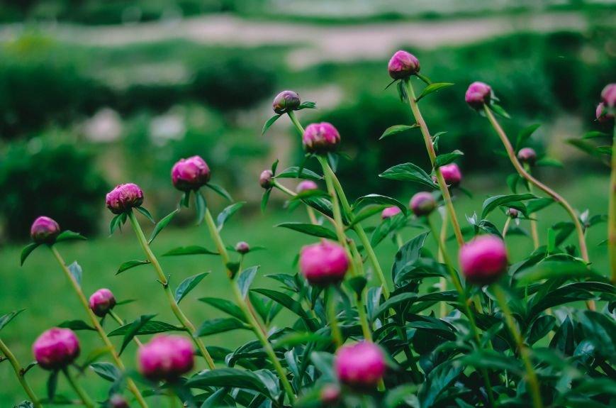 Весенние цветы – красота, поднимающая настроение (ФОТО), фото-16