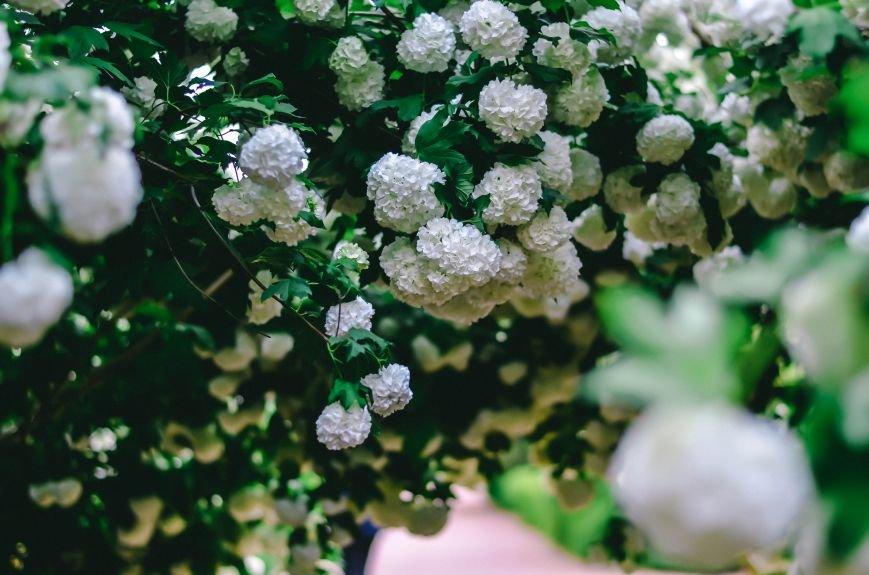 Весенние цветы – красота, поднимающая настроение (ФОТО), фото-15