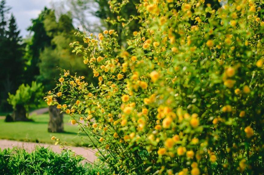Весенние цветы – красота, поднимающая настроение (ФОТО), фото-8