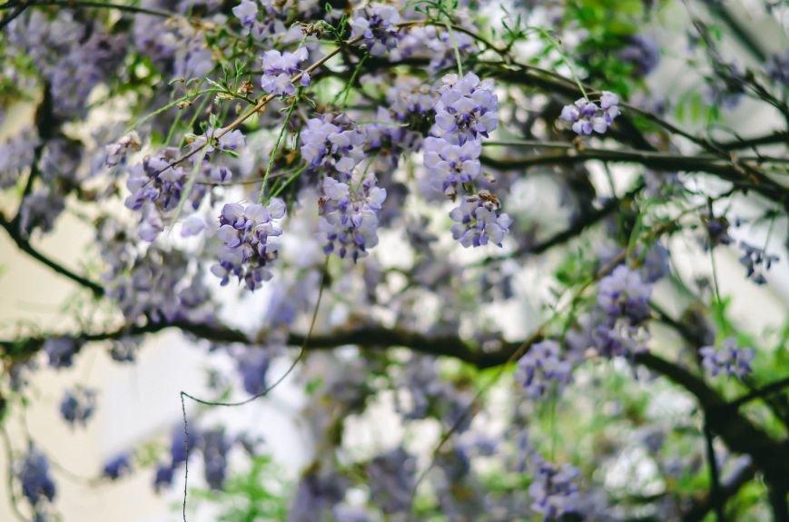 Весенние цветы – красота, поднимающая настроение (ФОТО), фото-12