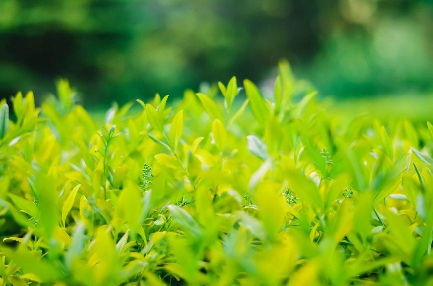 Весенние цветы – красота, поднимающая настроение (ФОТО), фото-10