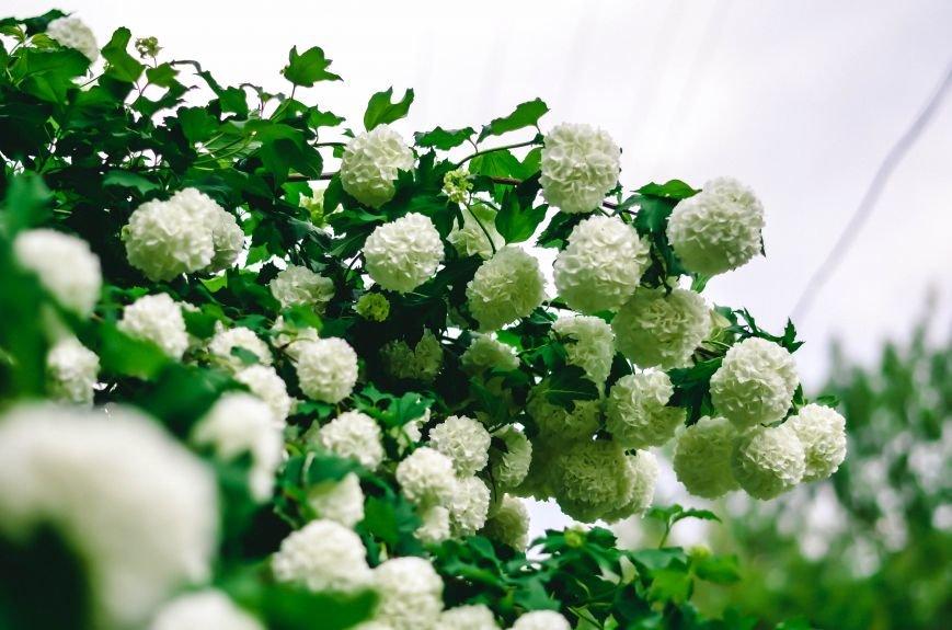 Весенние цветы – красота, поднимающая настроение (ФОТО), фото-14
