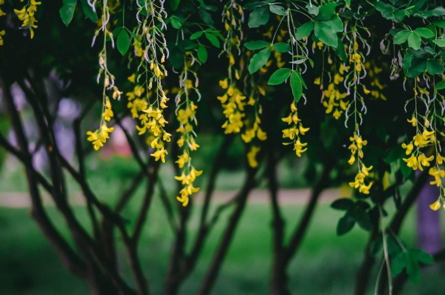 Весенние цветы – красота, поднимающая настроение (ФОТО), фото-17