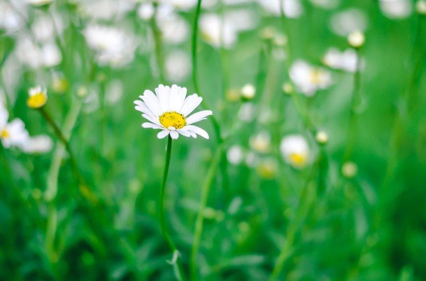 Весенние цветы – красота, поднимающая настроение (ФОТО), фото-6