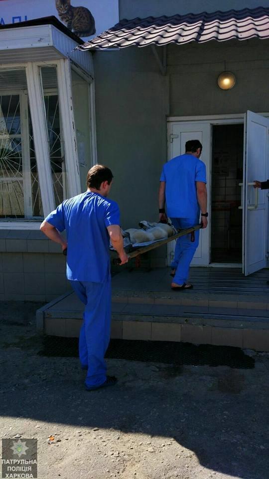 В Харькове ищут хозяев сбитой собаки (ФОТО), фото-1