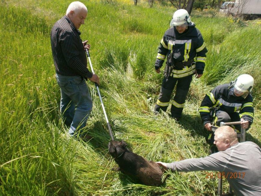 В Мариуполе  спасатели вытащили собаку  из колодца (Фотофакт), фото-1