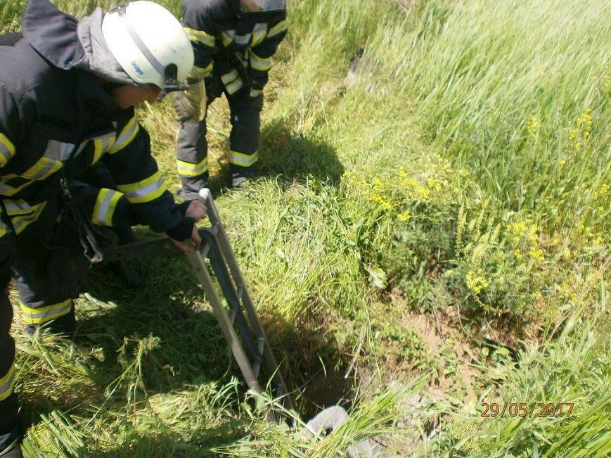 В Мариуполе  спасатели вытащили собаку  из колодца (Фотофакт), фото-2