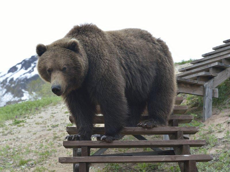На настильной тропе. Адам Кириленко
