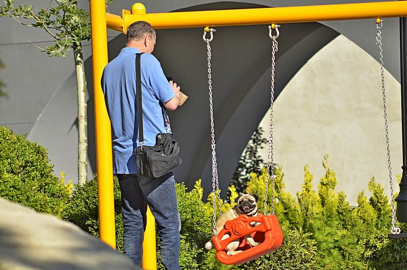 Новый одесский парк облюбовали бескультурные собаководы (ФОТО), фото-11