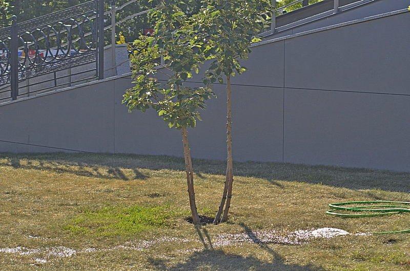 Новый одесский парк облюбовали бескультурные собаководы (ФОТО), фото-10
